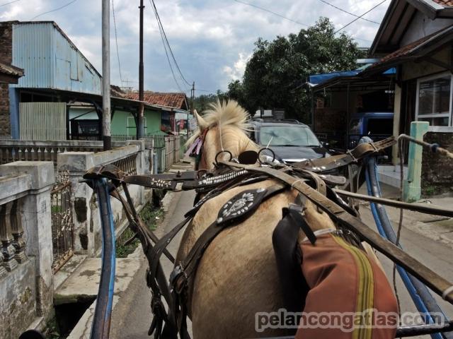 Kuda yang dipaksakan menjadi delman :(