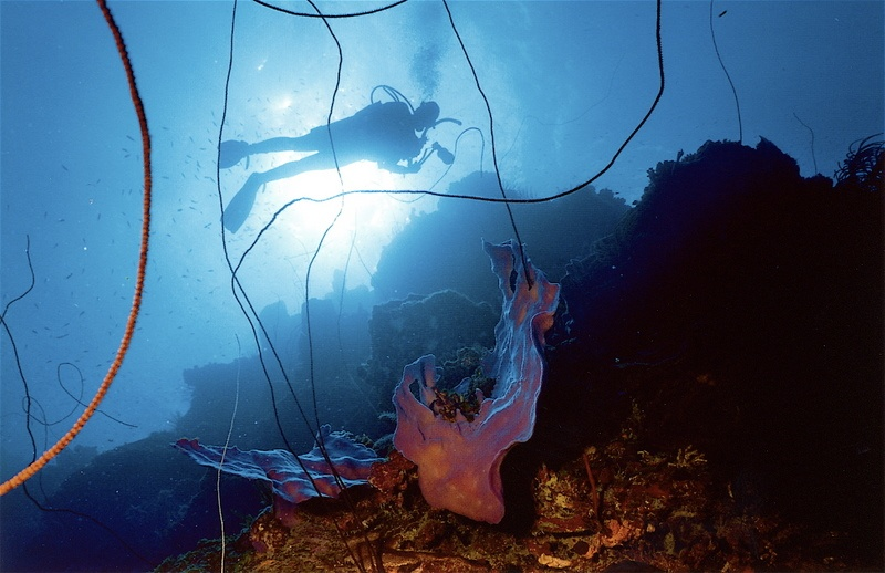 Underwater - copyright of Prince John website.